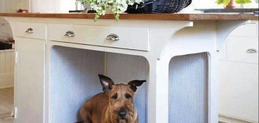 Hogar: Consejos Para Que Tu Mascota Disfrute De La Casa.